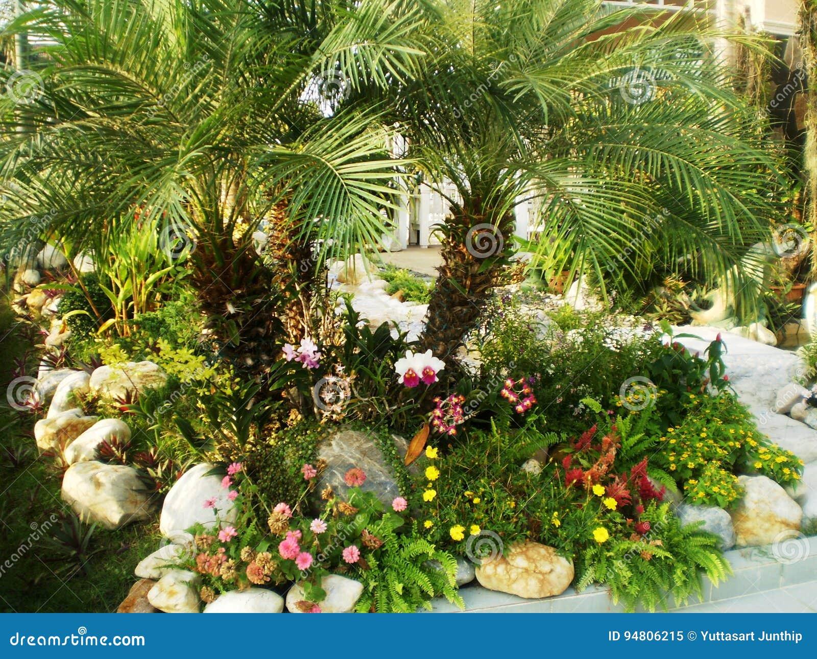 Palme Da Vaso Per Esterno idee domestiche della decorazione del giardino immagine