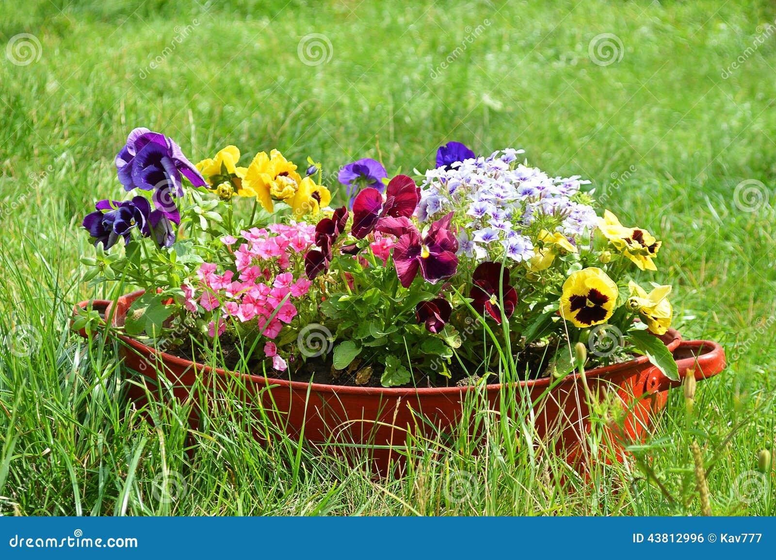 Ideen Fur Garten Blumen Im Alten Waschbecken Stockfoto Bild Von