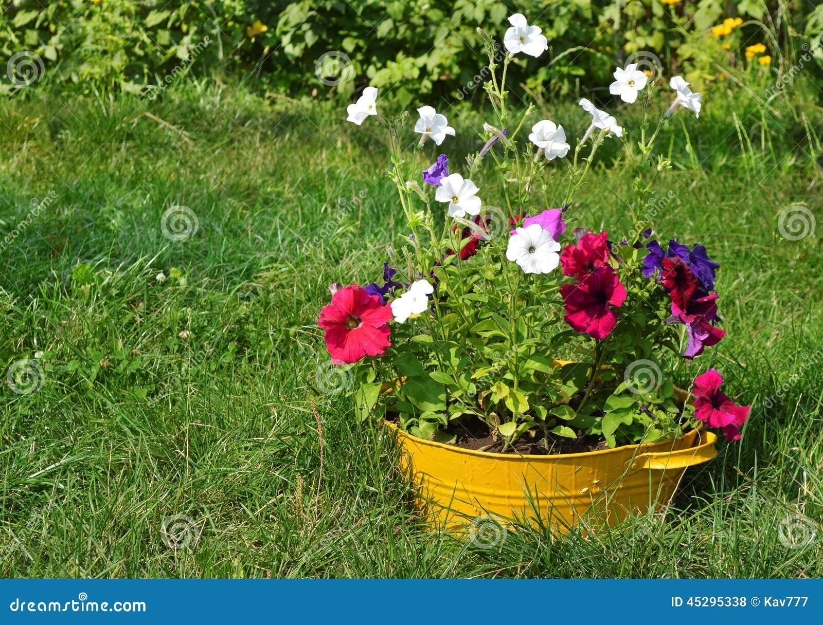 ideen f r garten blumen im waschbecken stockfoto bild von auslegung flora 45295338. Black Bedroom Furniture Sets. Home Design Ideas