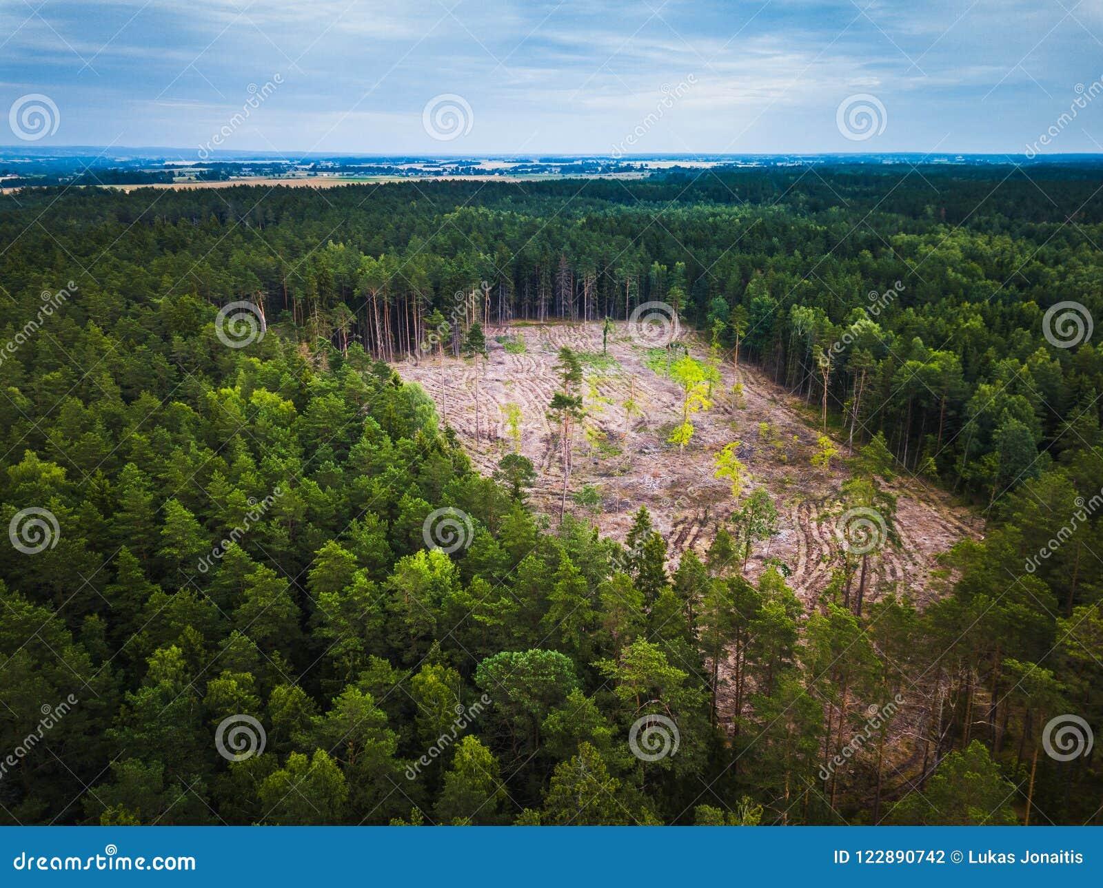 Ideia aérea da serração de madeira da floresta