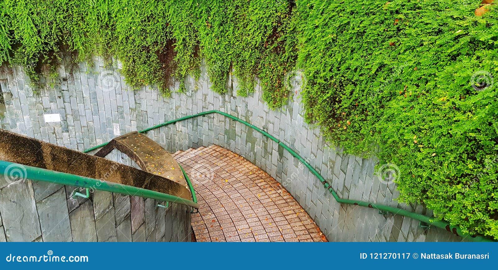 Ideia superior da maneira abaixo da escadaria com os trilhos de aço inoxidável verdes e a planta verde bonita da videira ou da tr
