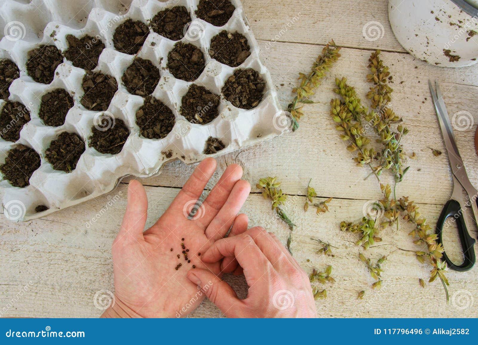 A ideia superior de um ` s da mulher entrega a plantação de sementes prudentes na caixa do ovo