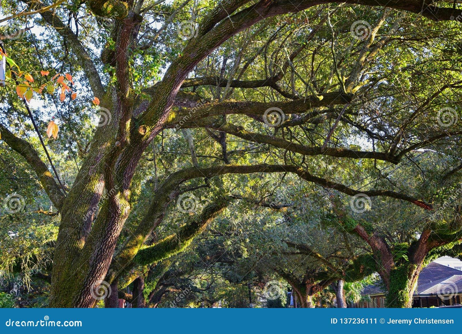 Ideias das árvores e dos aspectos originais da natureza que cercam Nova Orleães, incluindo associações refletindo nos cemitérios