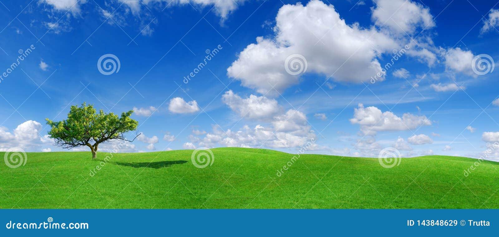 Idylle, panoramisch landschap, eenzame boom onder groene gebieden