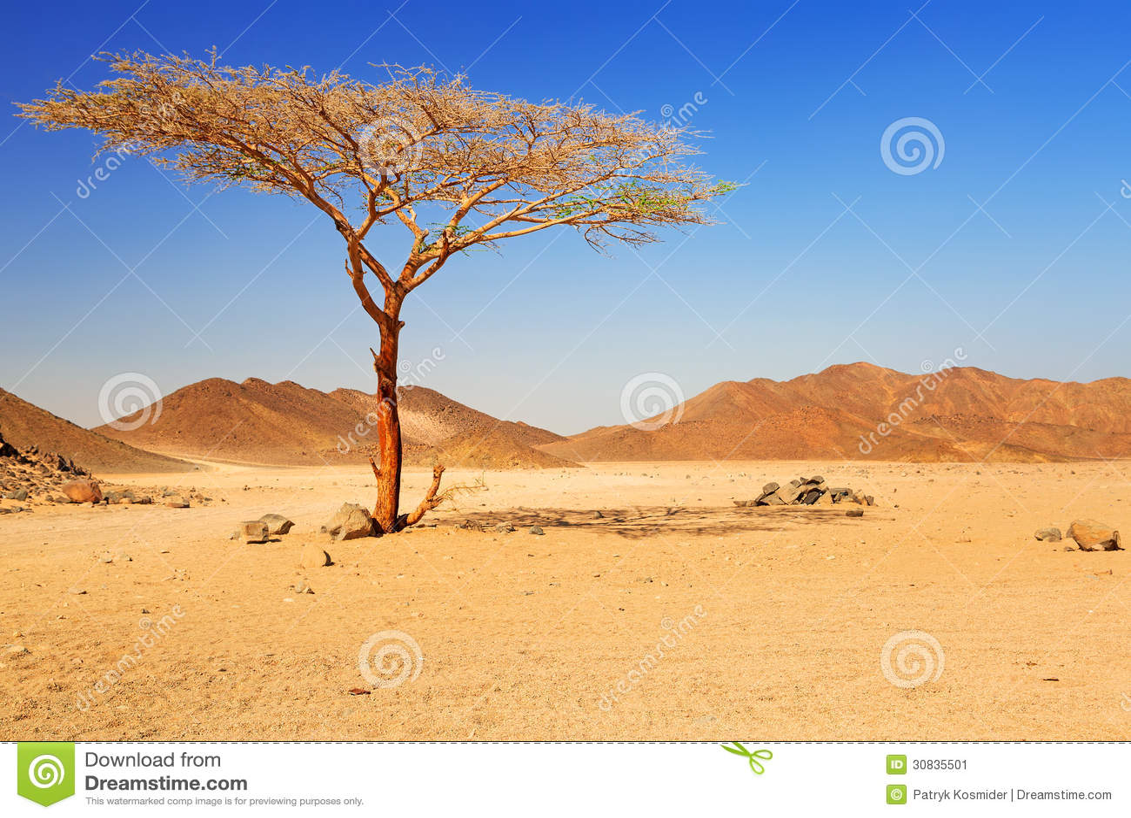 Desert singles