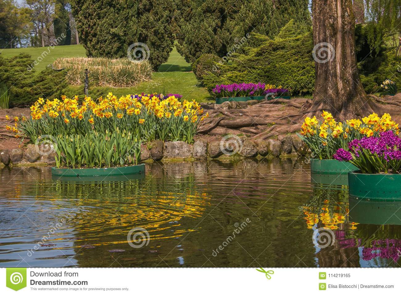 Idyllic Landscape In The Spring Season Little Lake With Flowers