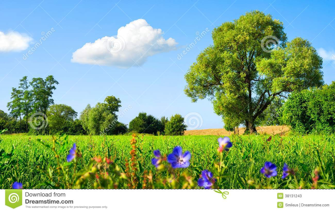 Idyllic Meadow At Nice Weather Stock Image Image Of Deciduous Farmland 38131243