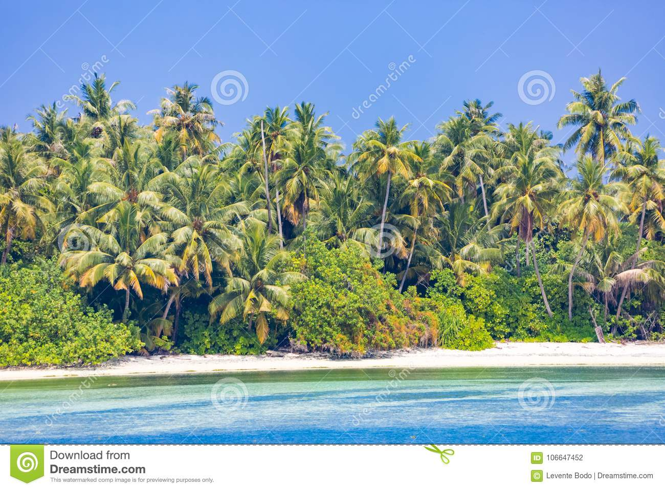 Tranquil Beach Scene Exotic Tropical Beach Landscape For Background