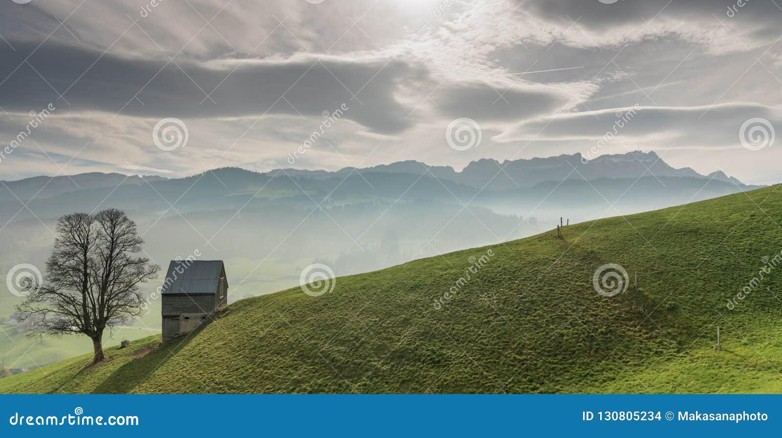 Idylliczny i pokojowy góra krajobraz z samotnym drzewo na trawiastym zboczu i i
