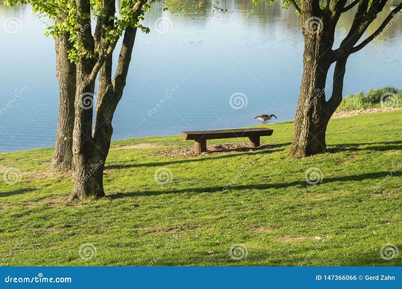 Idylliczny jezioro z rekreacyjnymi udostępnieniami i rekreacyjnym terenem w wiośnie z Kanada gąską na brzeg