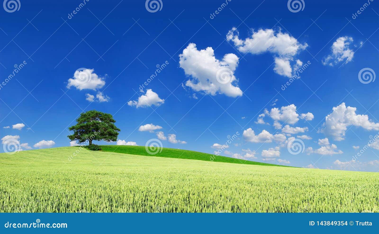 Idylliczny krajobraz, osamotniony drzewo w?r?d zielonych poly