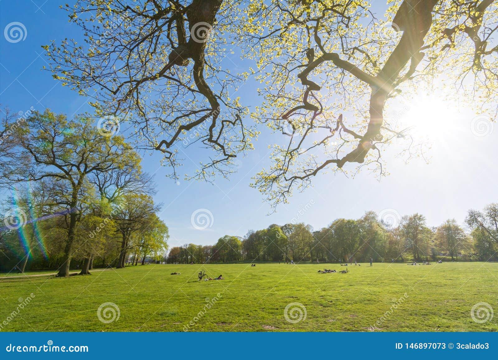 Idylliczny park w wiośnie z sunbeams i obiektyw migoczemy