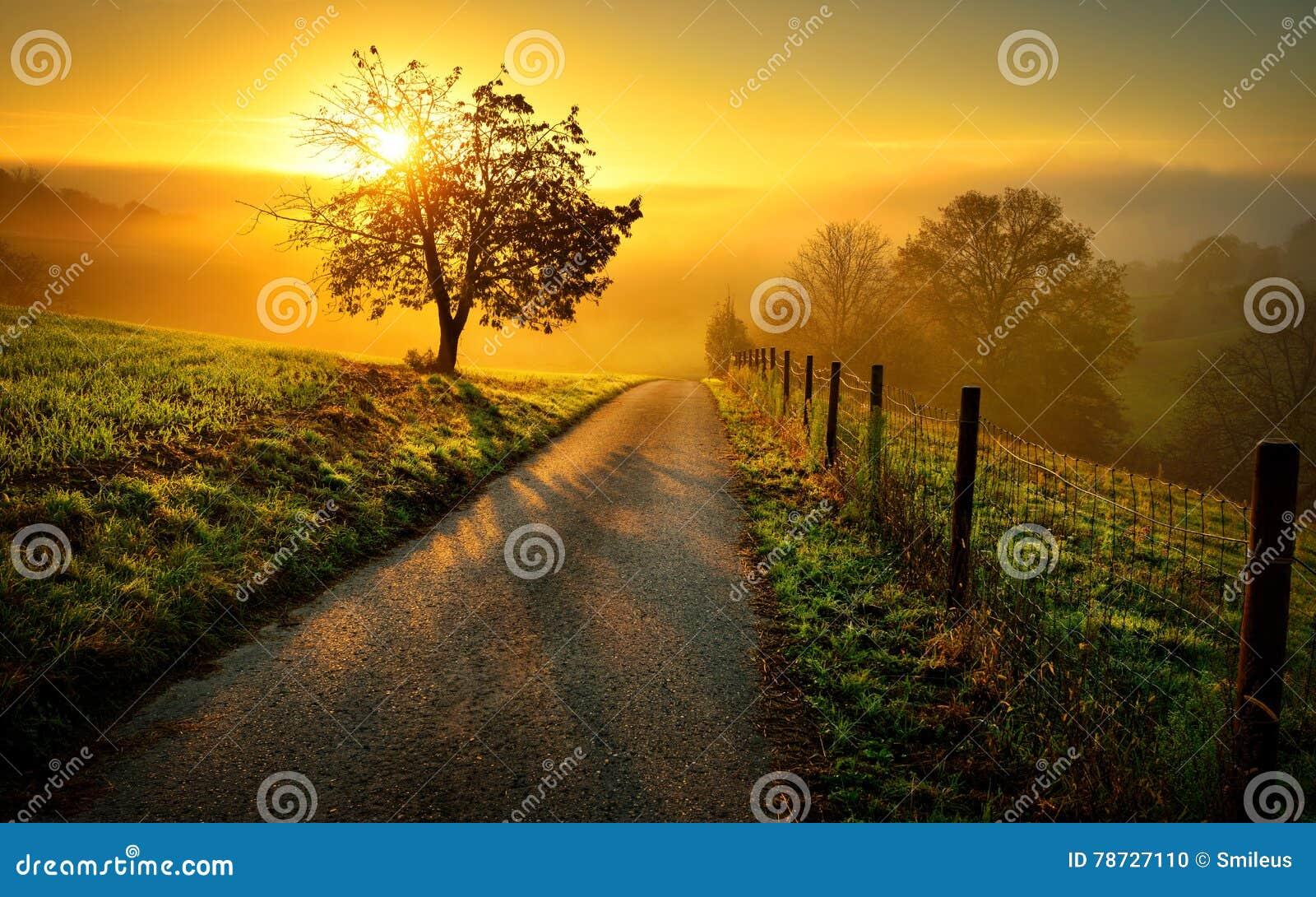 Idylliczny wiejski krajobraz w złotym świetle