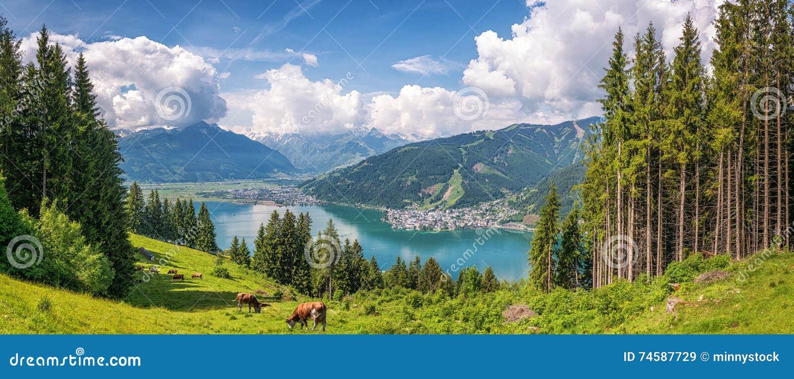 Idyllisch alpien landschap met koeien het weiden en beroemd Zeller-Meer, Salzburg, Oostenrijk