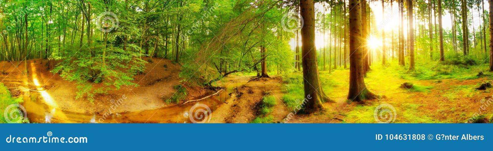Download Idyllisch bos met beek stock foto. Afbeelding bestaande uit nave - 104631808