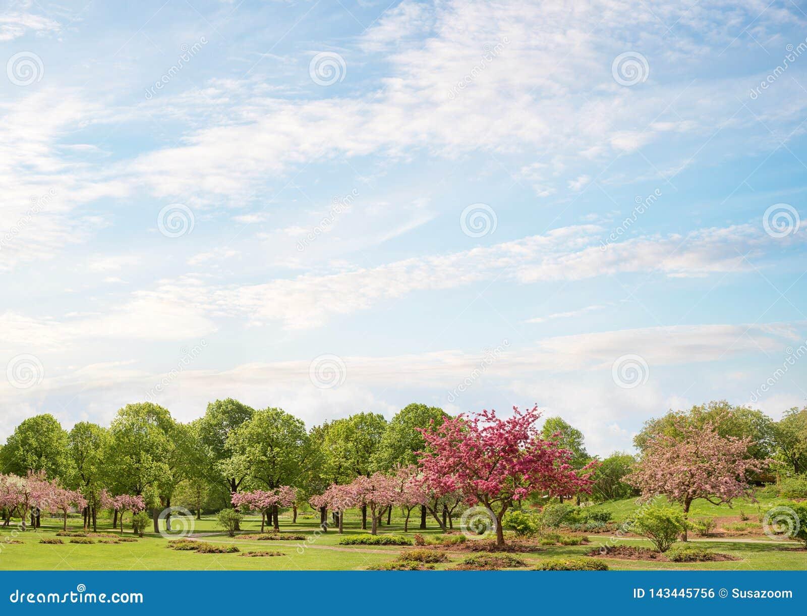 Idyllisch parklandschap met de bloeiende bomen van de krabappel