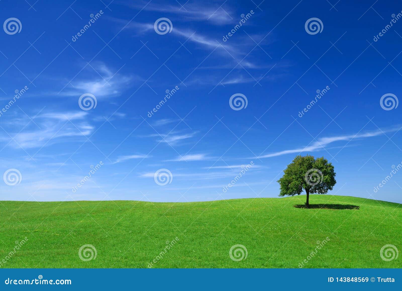 Idyllische Landschaft, einsamer Baum unter grünen Feldern
