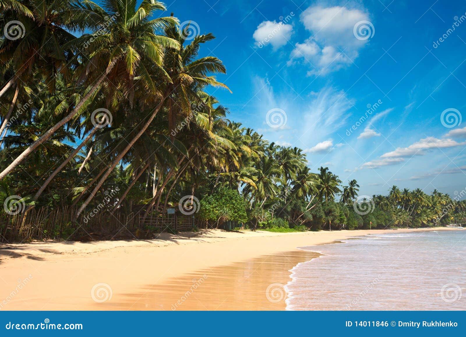 Idyllisk lankasri för strand