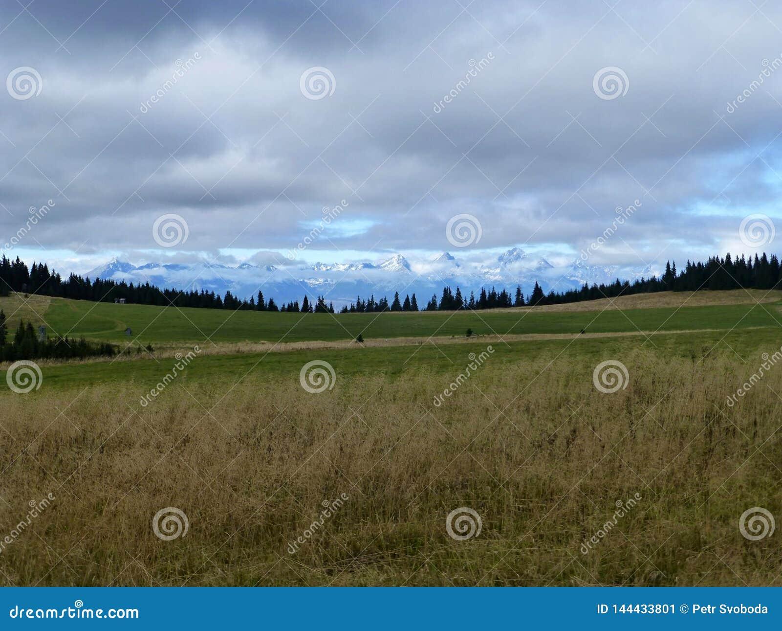 Iew der hohen schneebedeckten Spitzen Tatras von der Wiese in niedrigem Tatra
