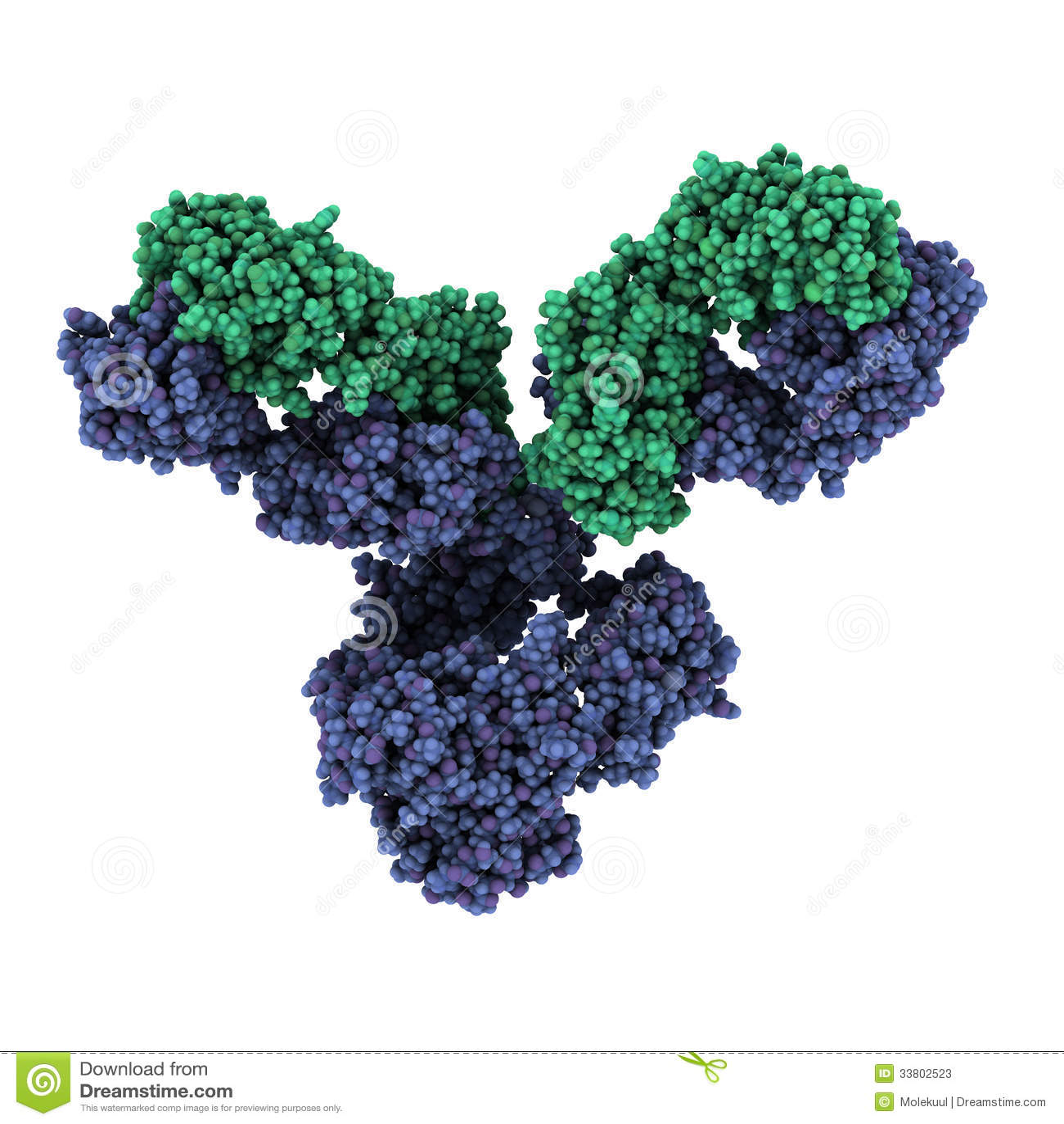 Igg1 Monoclonal Antibody Immunoglobulin Play Essential