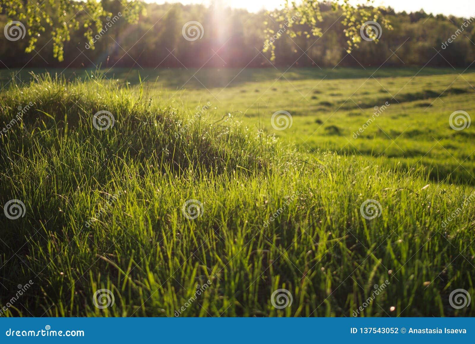 Igualación del sol en la hierba