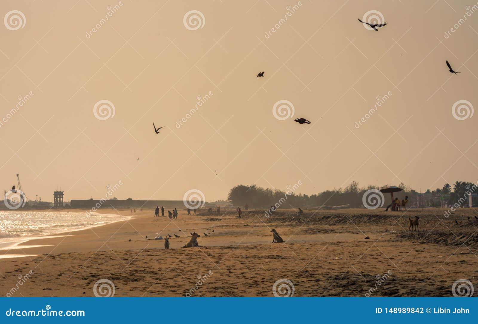 Igualaci?n de la broche del ?rea de la playa de Kollam
