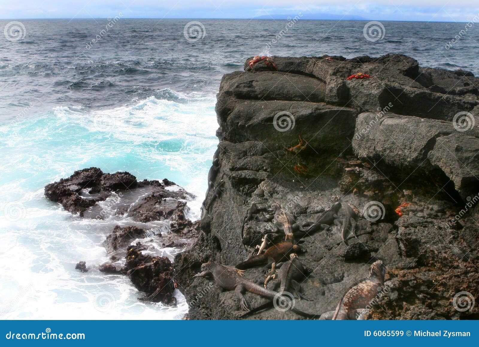 Iguana e caranguejos marinhos de Sally Lightfoot