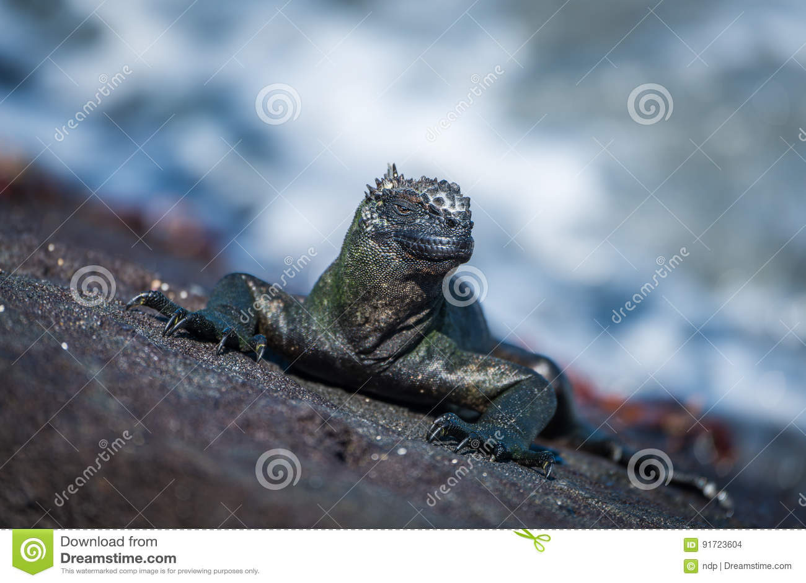 Iguana marinha e diversos caranguejos de Sally Lightfoot
