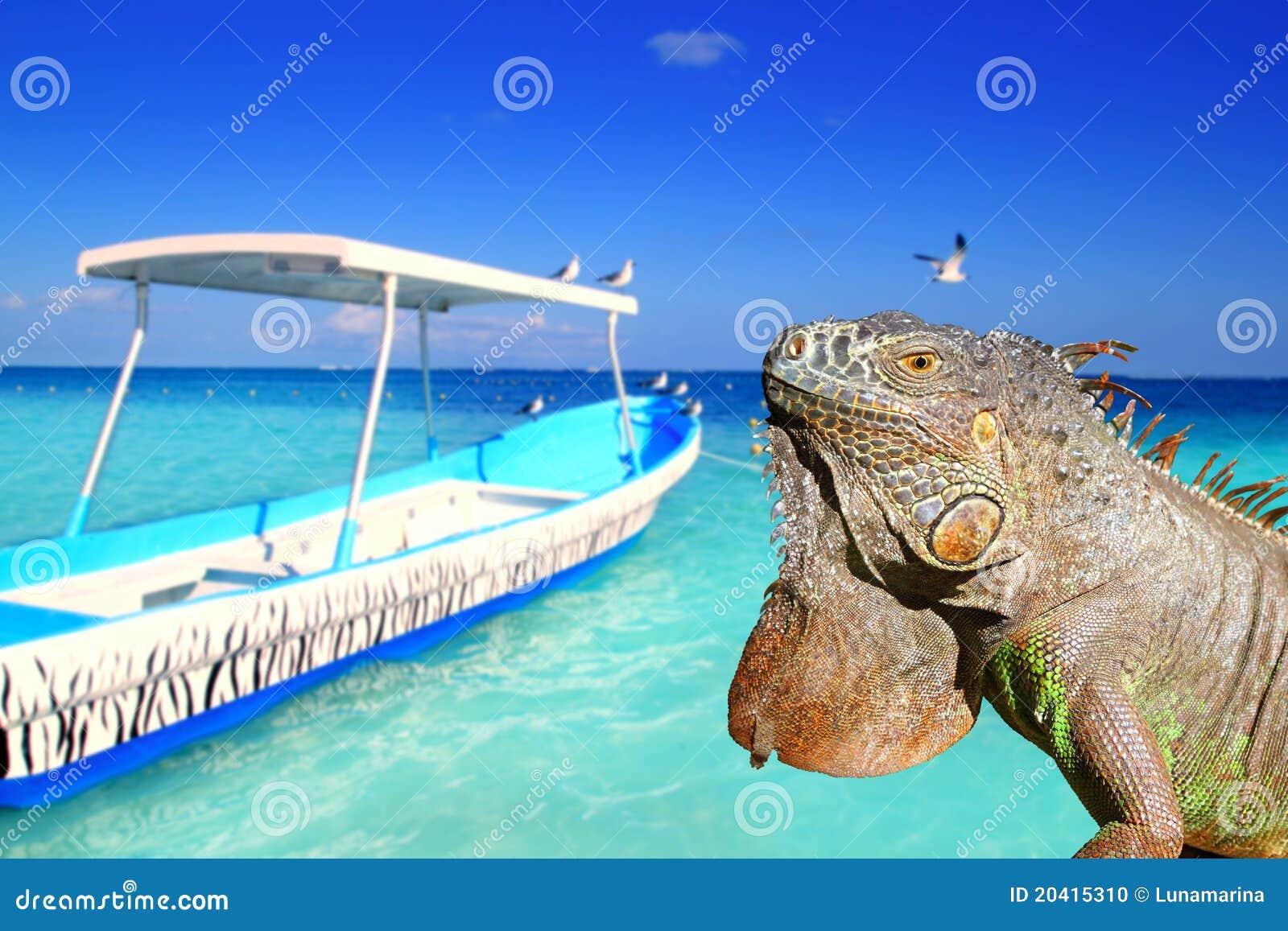 Iguana mexicana en playa tropical del Caribe