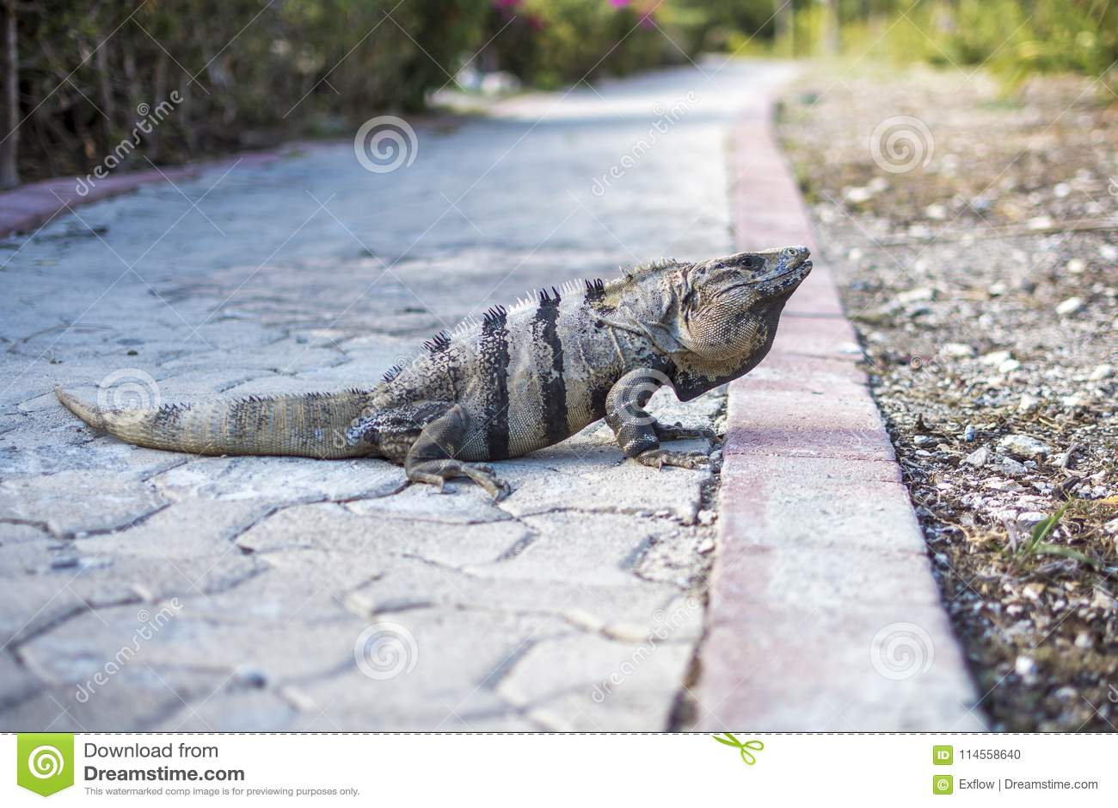Mexican Iguana Slots
