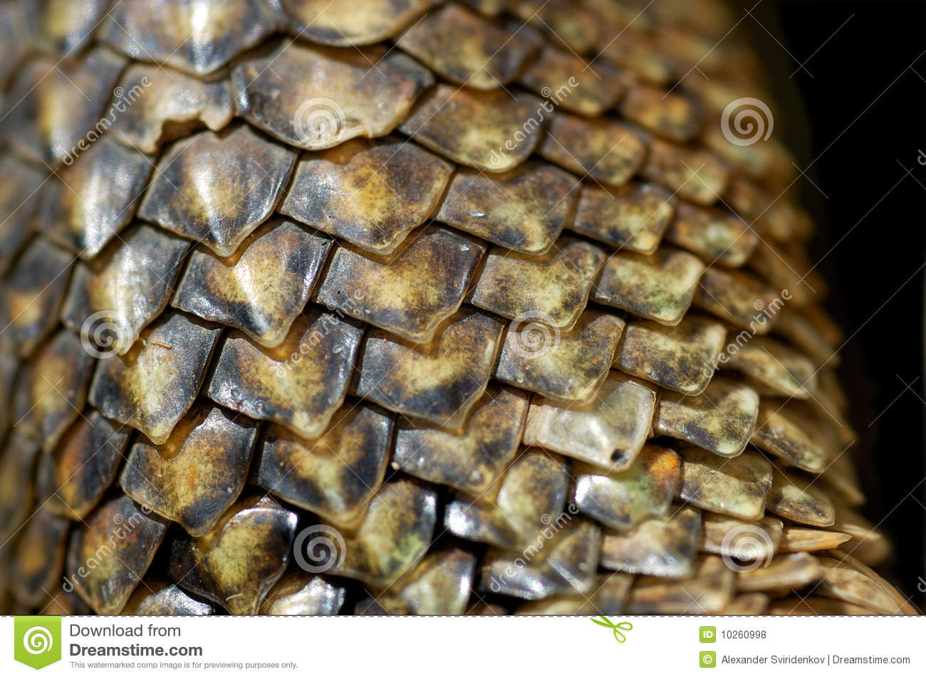 Iguana Scales Close-up Royalty Free Stock Photos - Image: 10260998