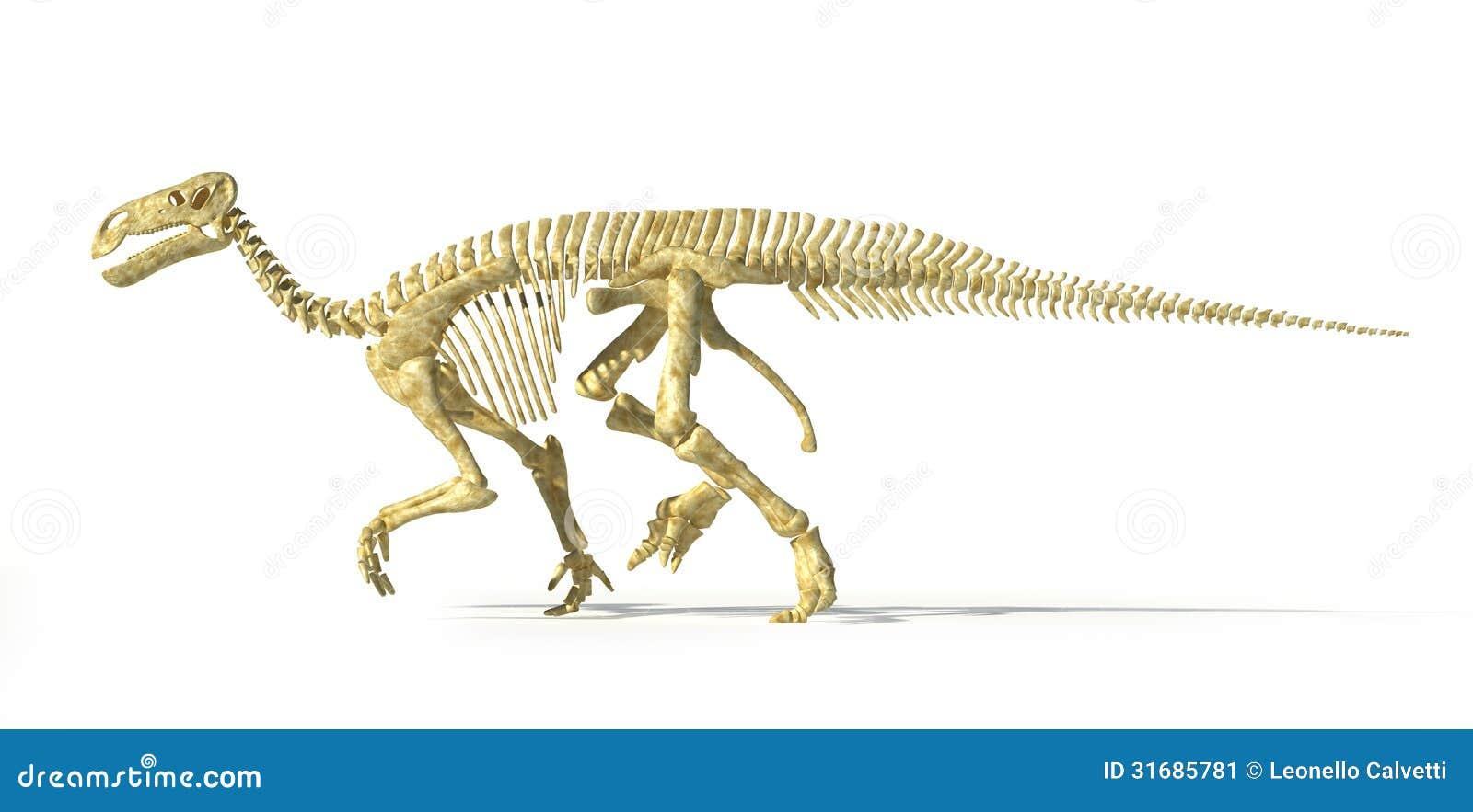 iguanodon dinosaur full skeleton photorealistic side view
