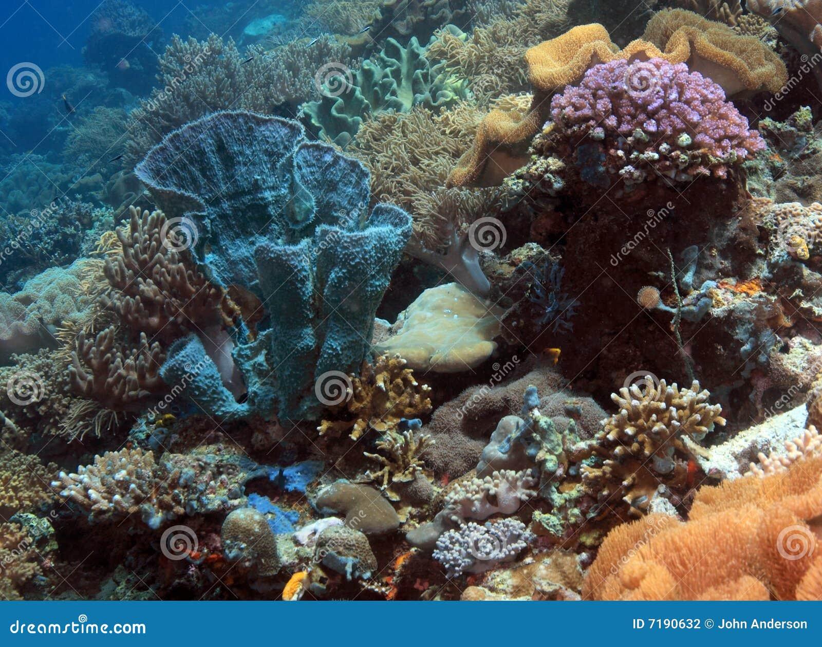 Iindonesian σκόπελος κοραλλιών