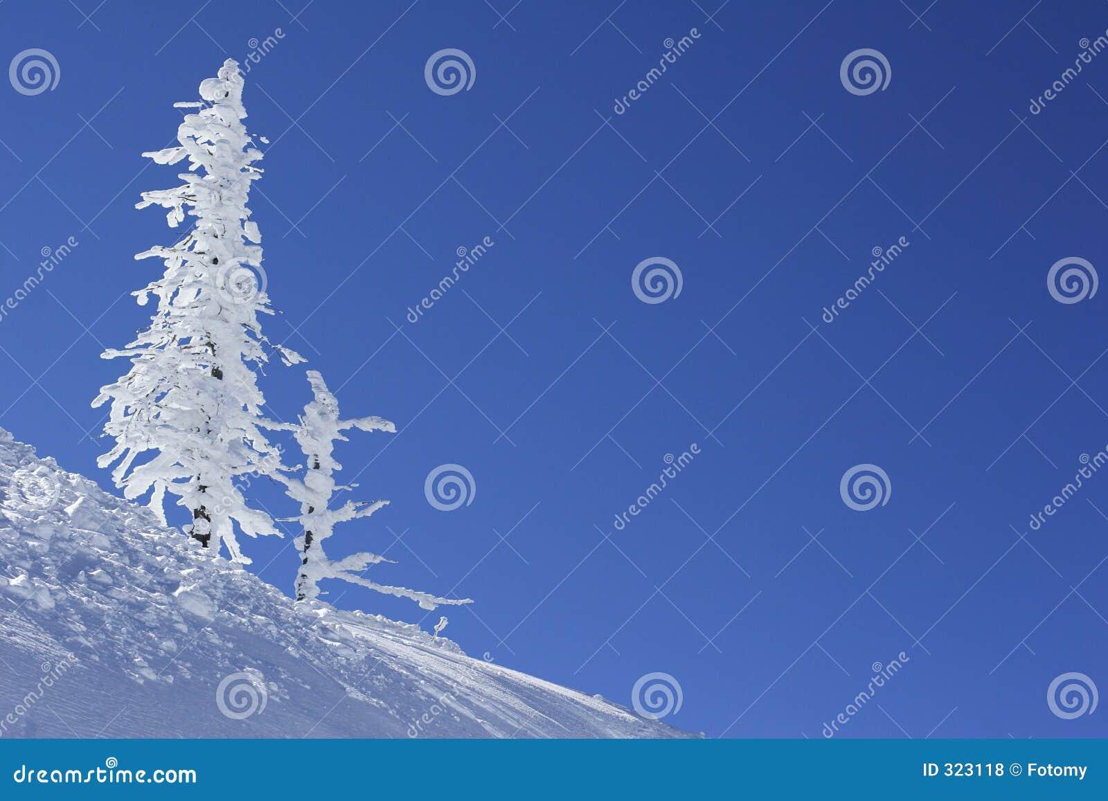 Ijs en sneeuw behandelde pijnboomboom