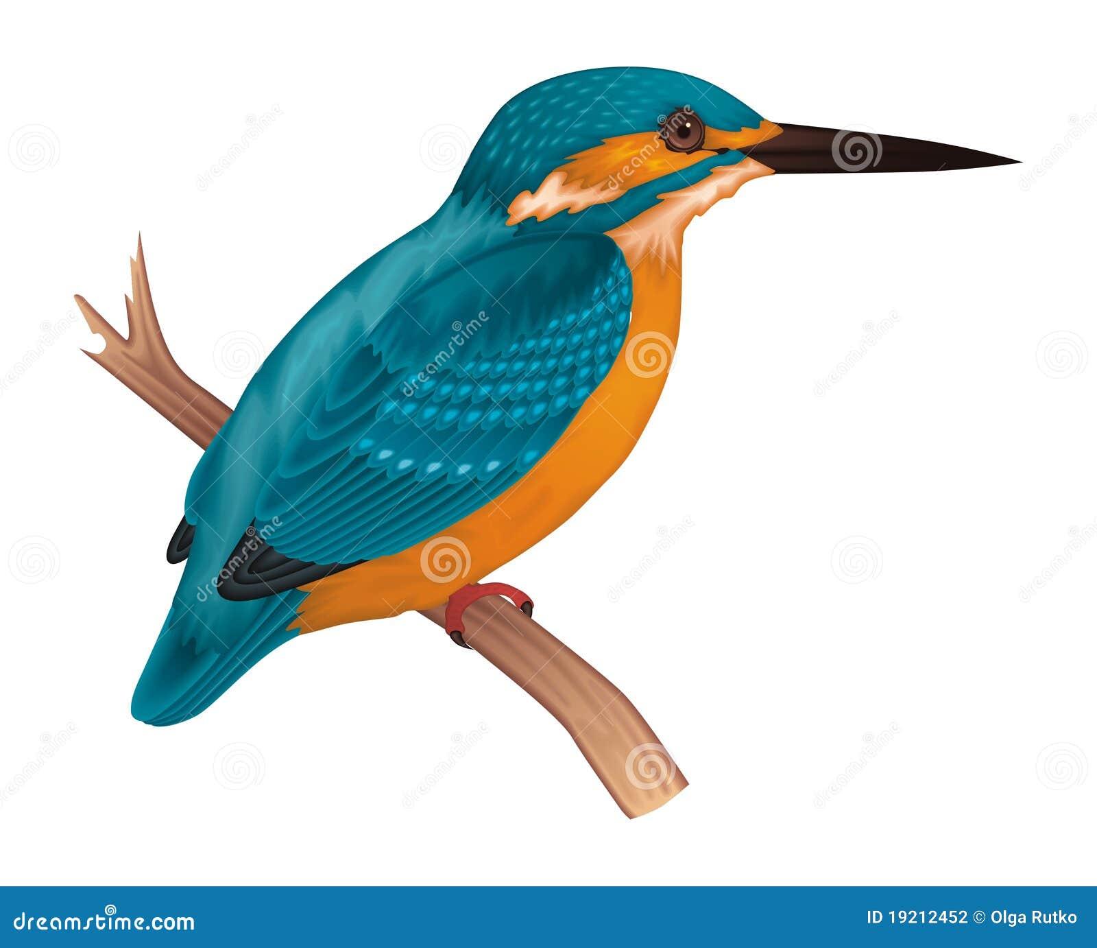 ijsvogel vector illustratie illustratie bestaande uit