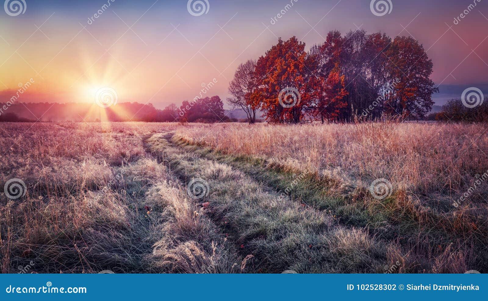 Ijzig de herfstlandschap bij zonsopgang op weide De kleurrijke landschapsherfst met rijp op het gras en heldere zon op horizon Da