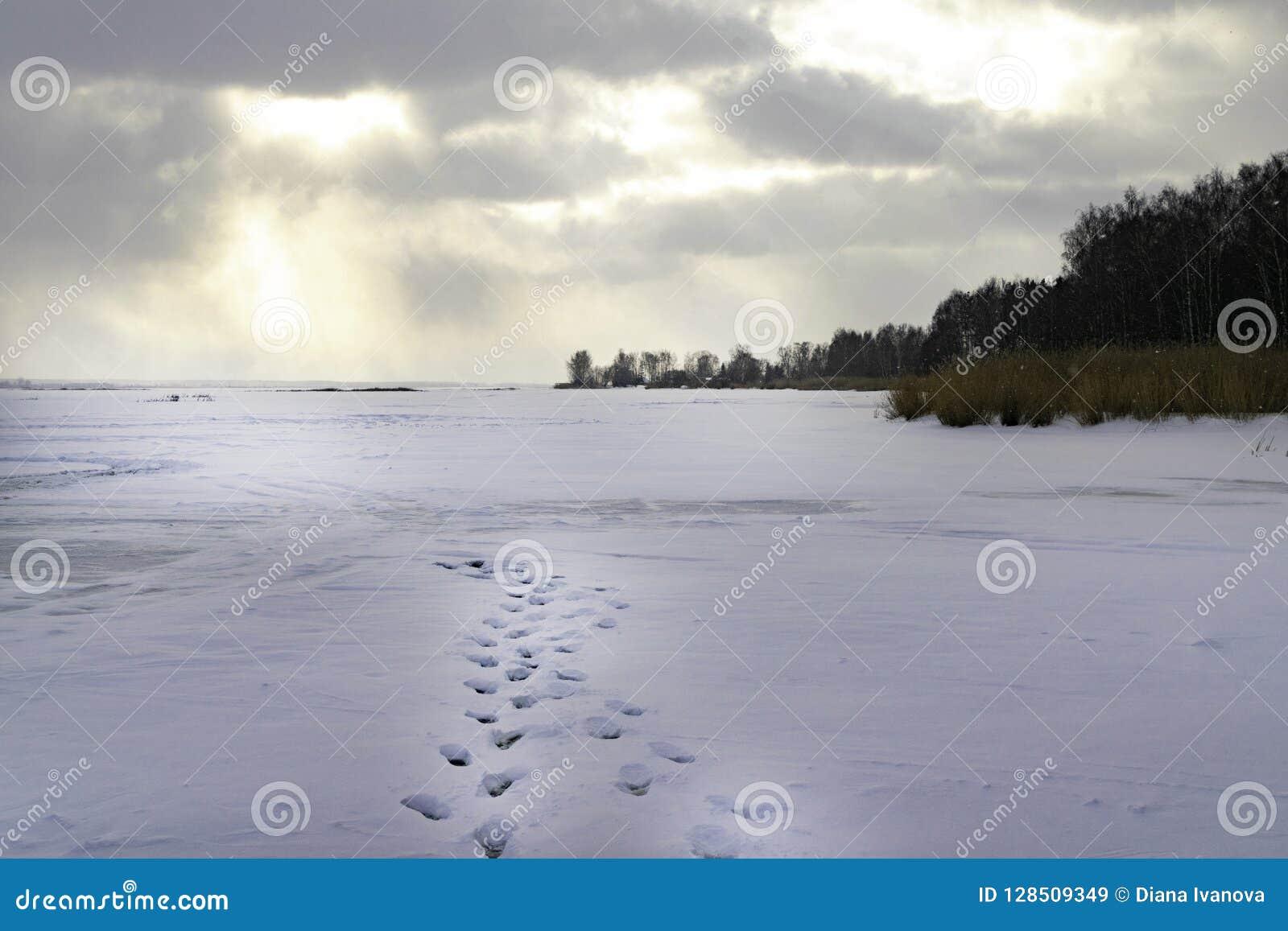 Ijzig de winterlandschap met bevroren rivier Schemering Koude ochtend Sneeuw Behandelde Bomen Zonsopgang Voetafdruk Rivier