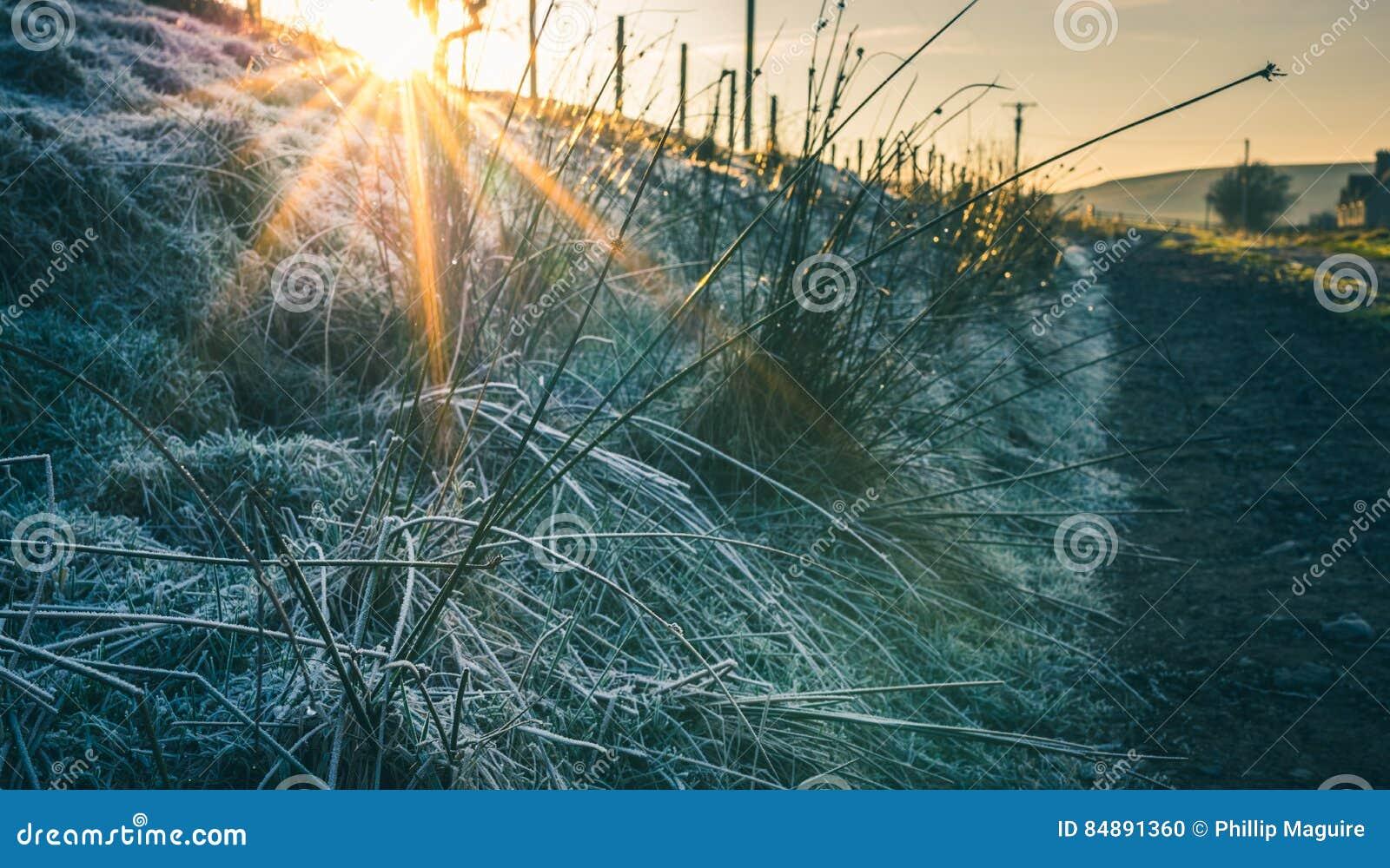 Ijzig gras in de winter