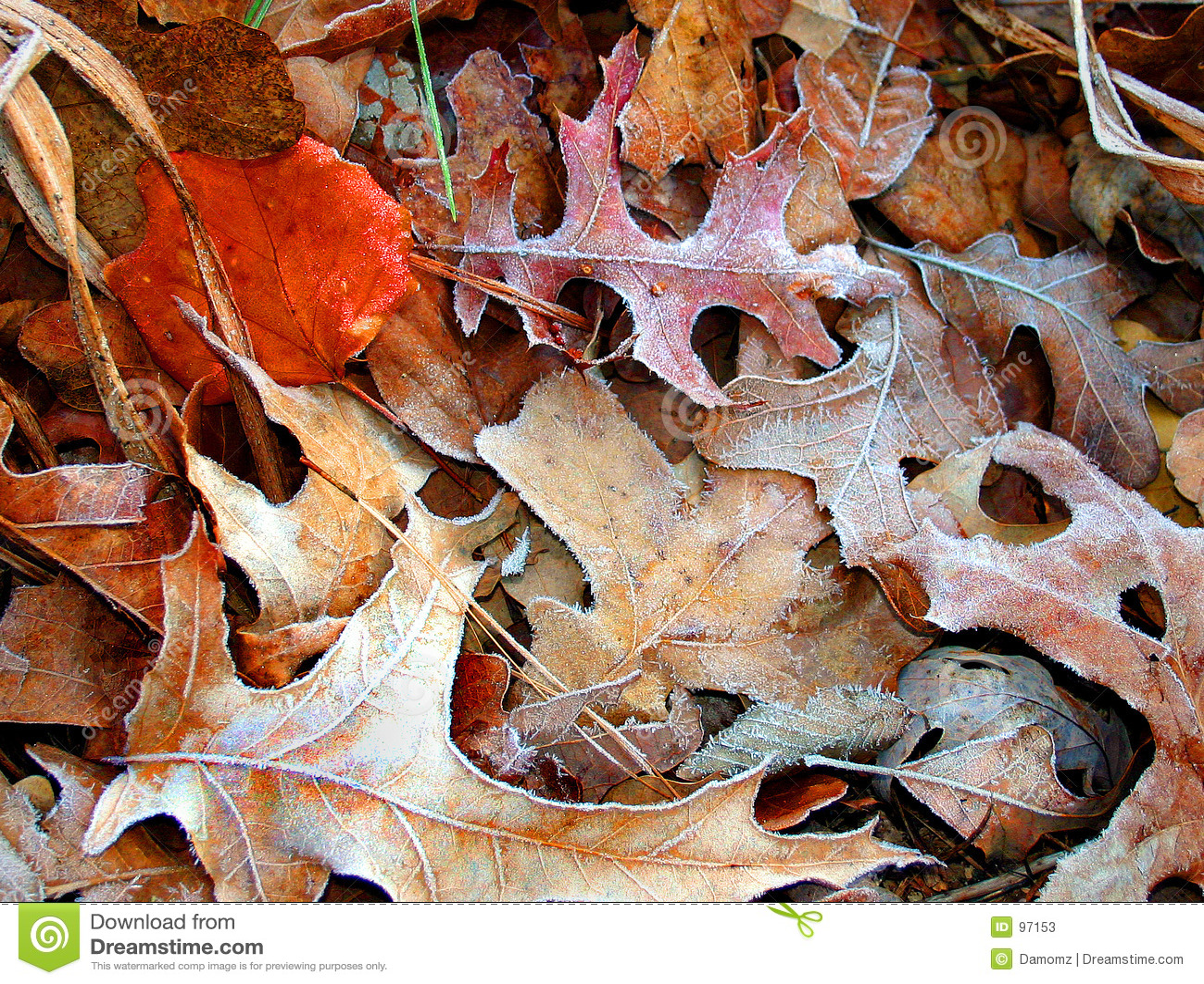Ijzige bladeren