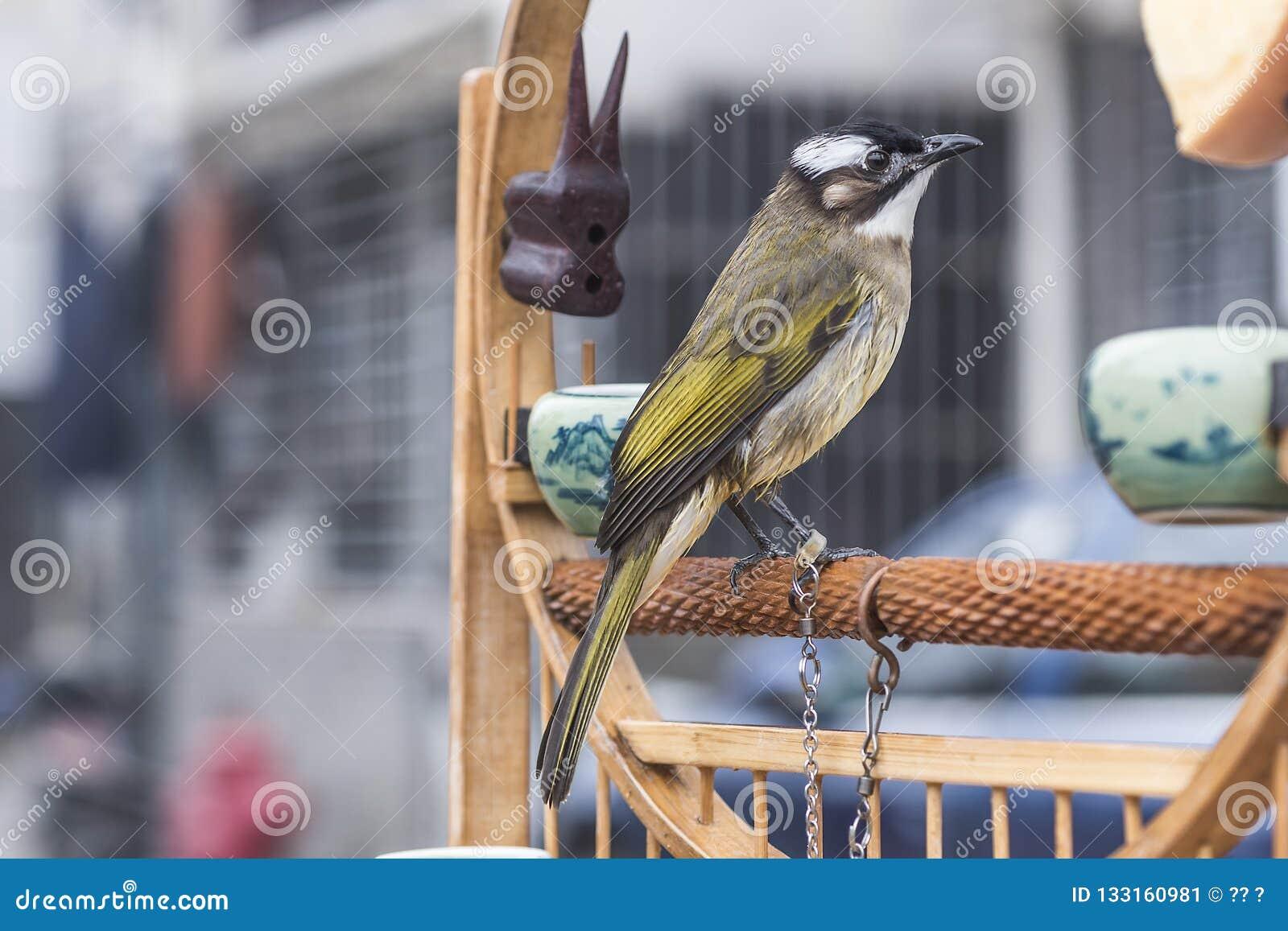 Ik wil vrij zijn Een vogel met een kabel op één been ziet vooruit eruit