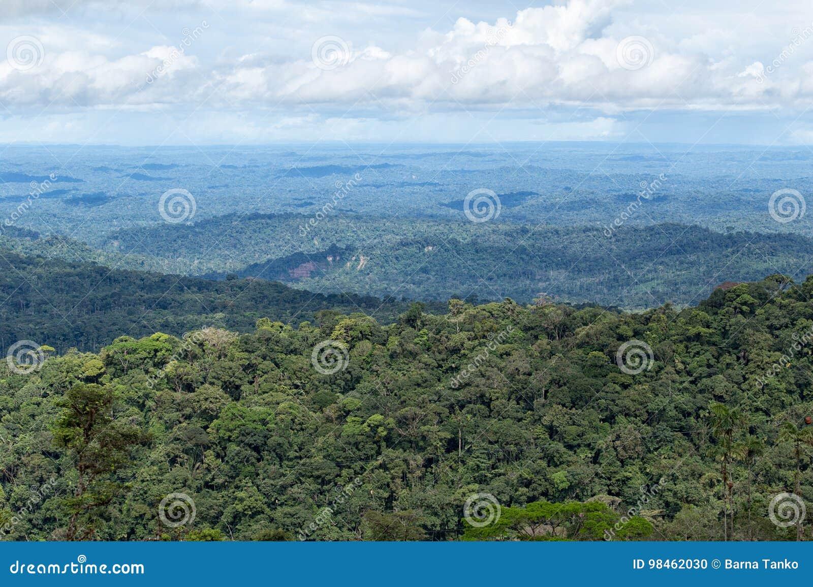 Il bacino di Amazon dell Ecuador