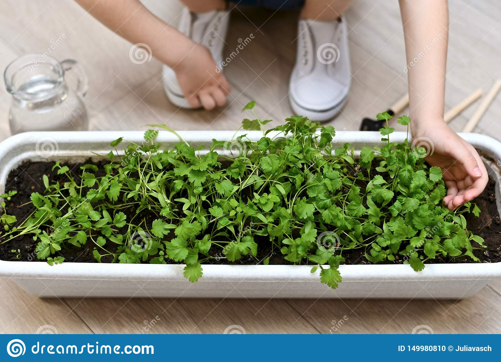 Il bambino tocca delicatamente i tiri di pianta