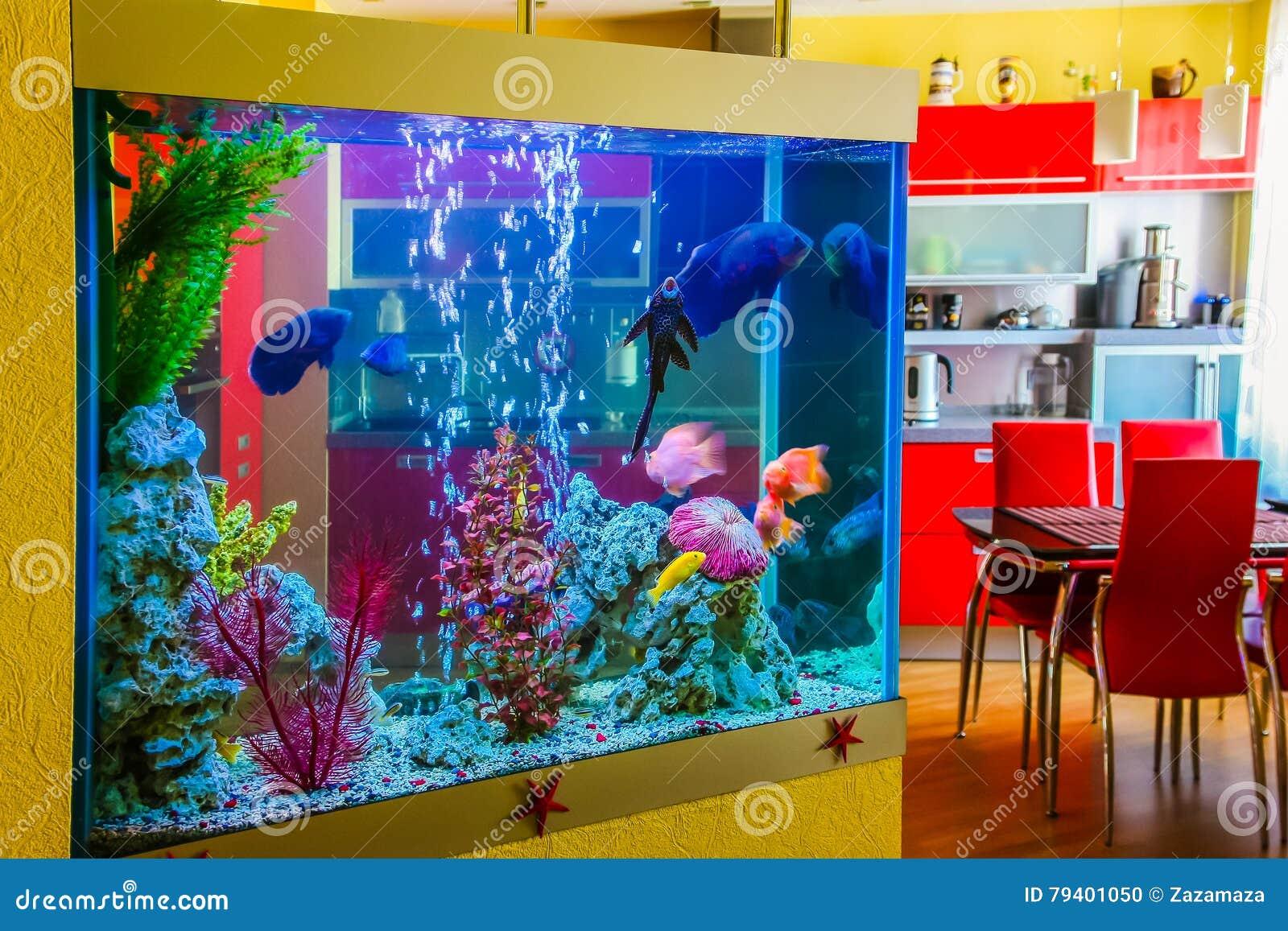 Il bello acquario con il pesce variopinto in una stanza for Acquario casa prezzi