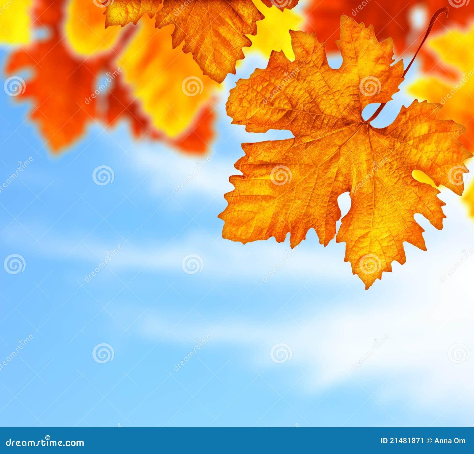 Il bello albero di autunno lascia il bordo della priorità bassa