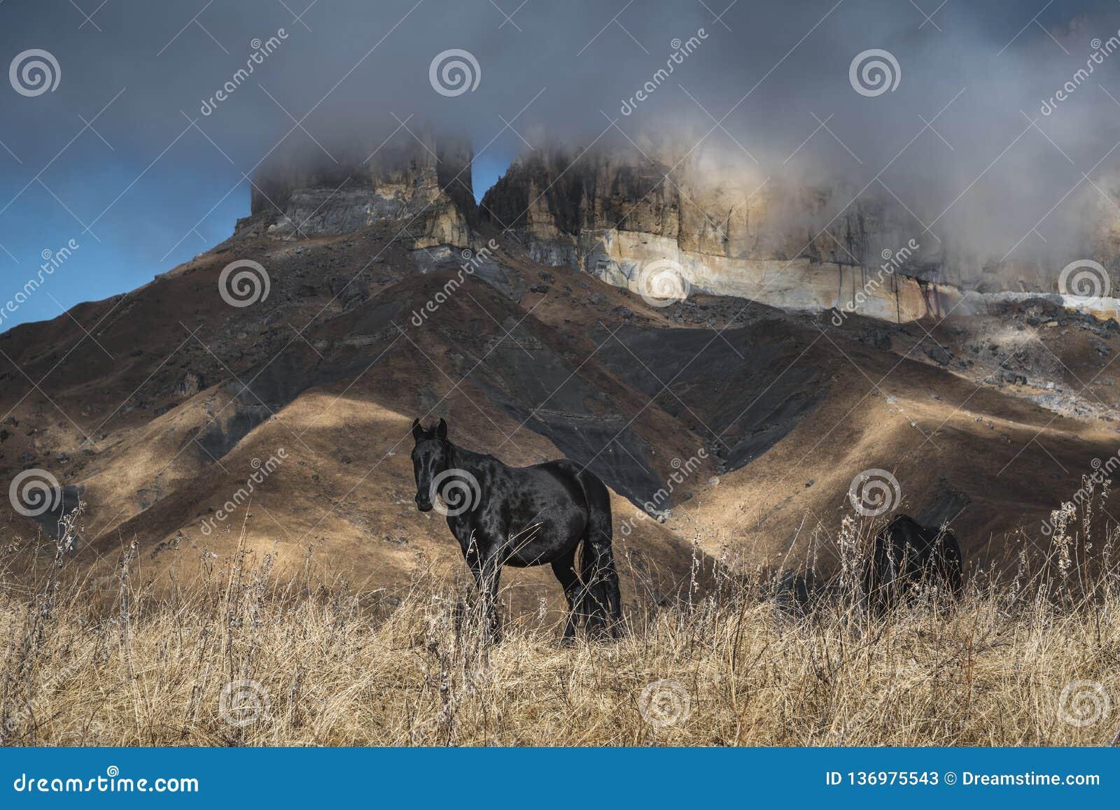 Il bello cavallo su un fondo delle montagne passa liberamente in un campo