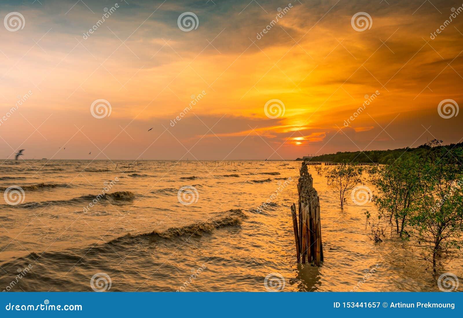 Il bello cielo del tramonto e si rannuvola il mare Volo dell uccello vicino all ecosistema della mangrovia della foresta della ma