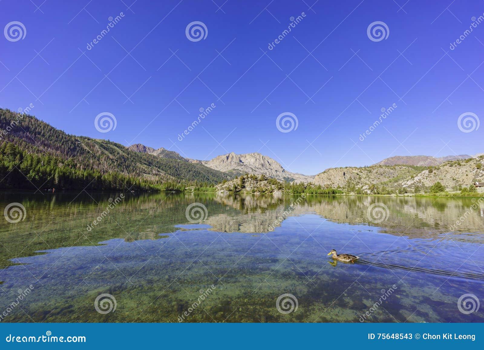 Il bello lago gull