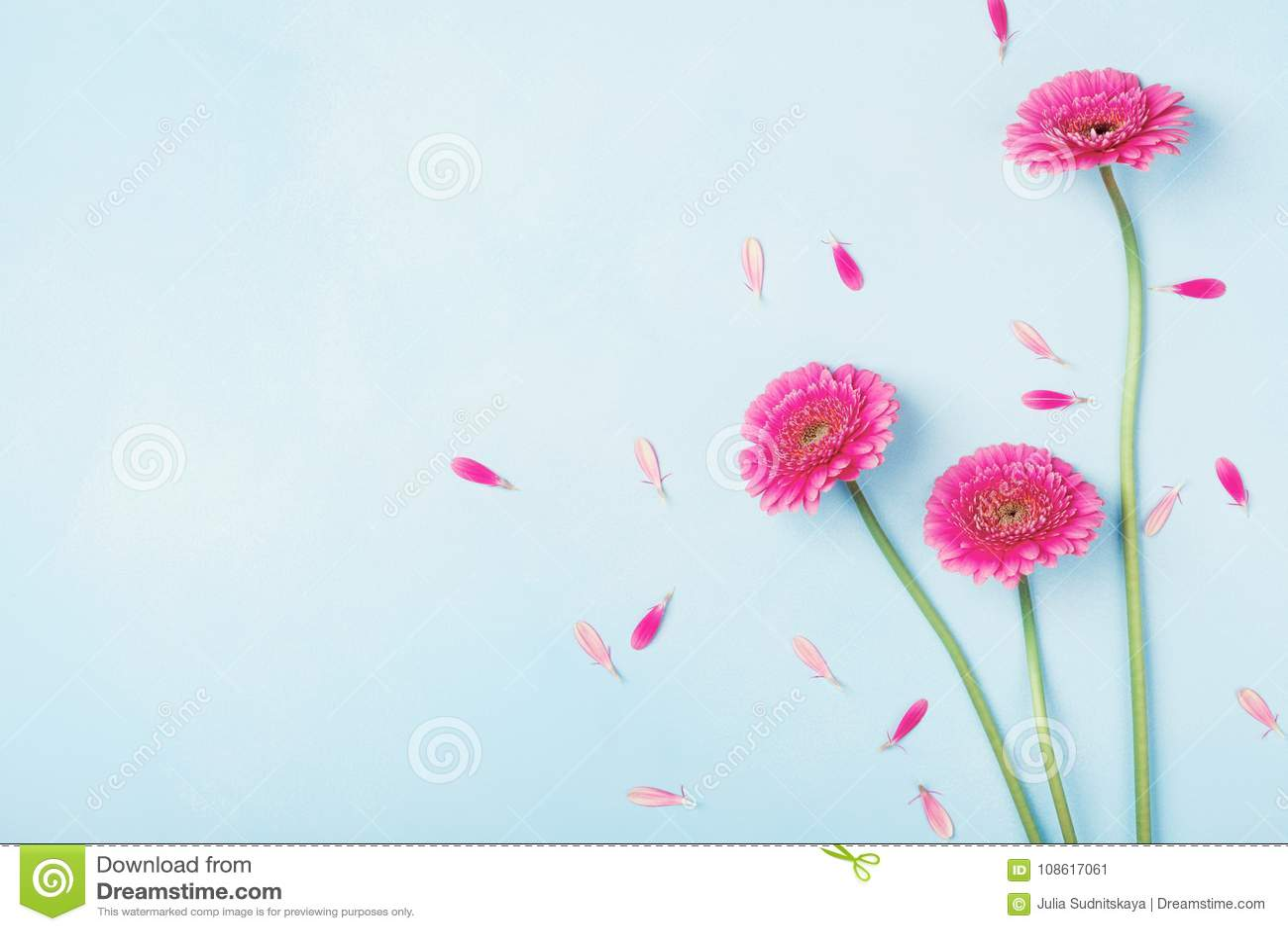 Il bello rosa della molla fiorisce sulla vista pastello blu del piano d appoggio Bordo floreale dentellare stile piano di disposi