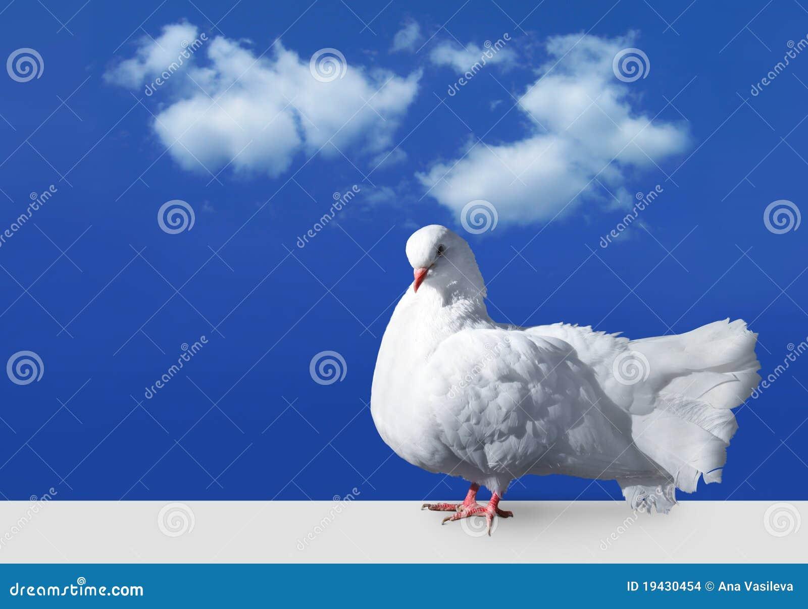 Il bianco si è tuffato contro il cielo
