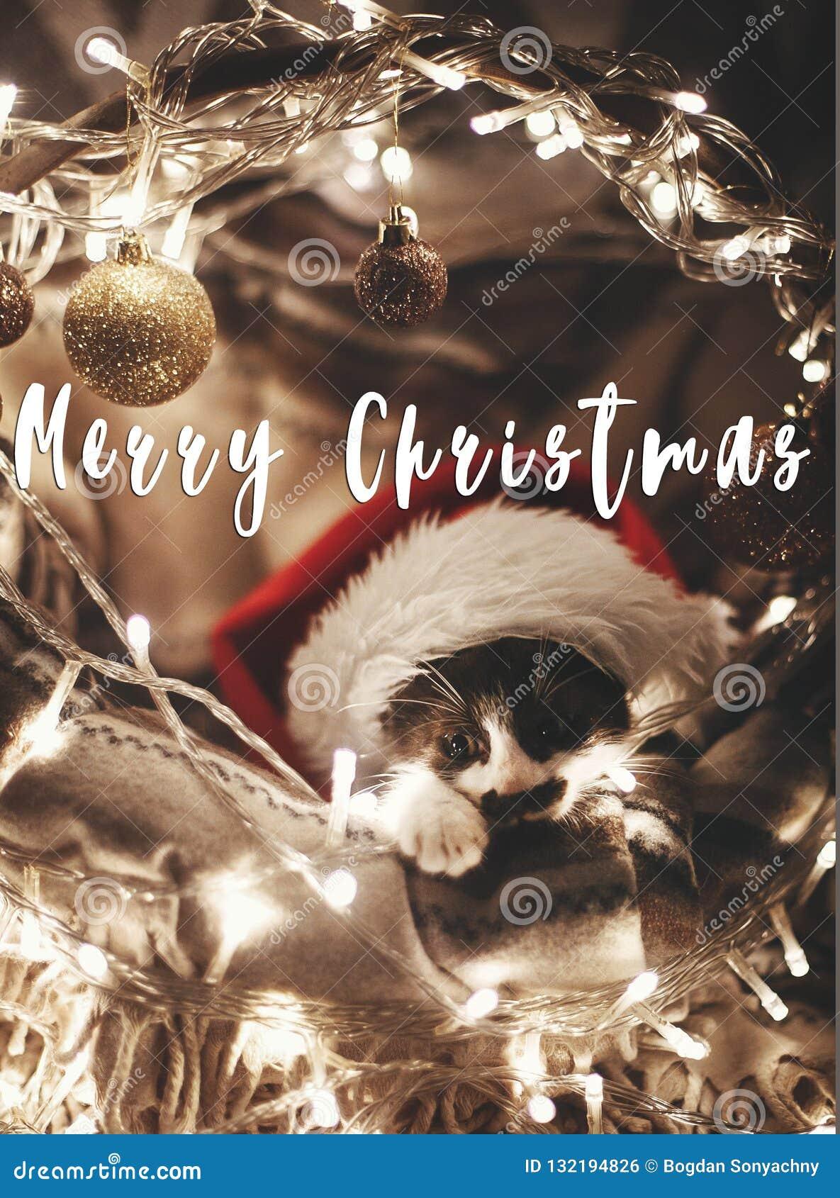 Sms Di Buon Natale.Il Buon Natale Manda Un Sms A Su Gattino Sveglio In Cappello Di Santa Che Si Siede Nel Baske Fotografia Stock Immagine Di Atmosferico Gatto 132194826